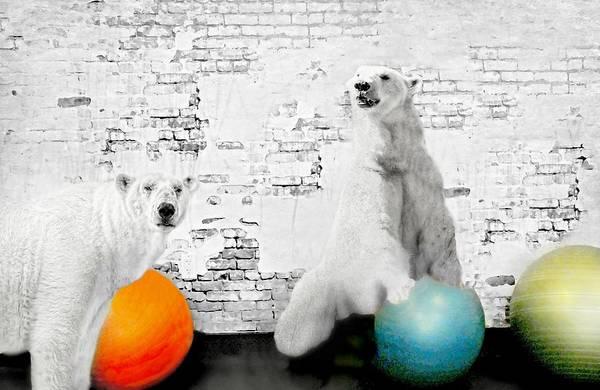 Wall Art - Photograph - Polar Pilates  by Diana Angstadt