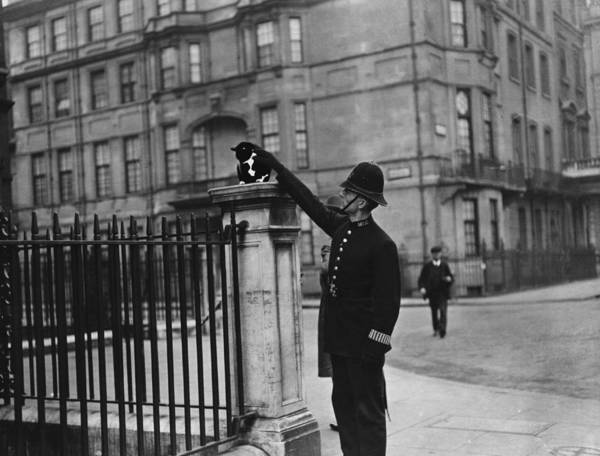 Police Force Photograph - Police Cat by Topical Press Agency