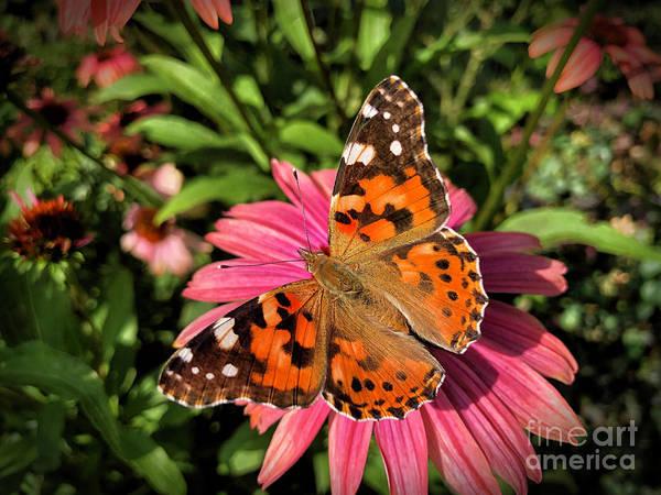 Wall Art - Photograph - Polish Butterfly by Mariola Bitner