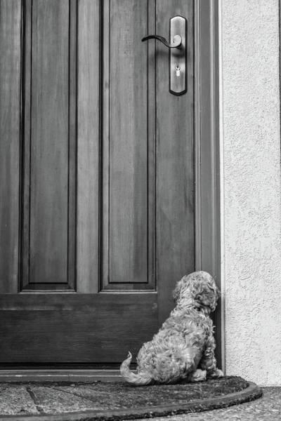 Wall Art - Photograph - Polite Puppy by Nancy Jacobson