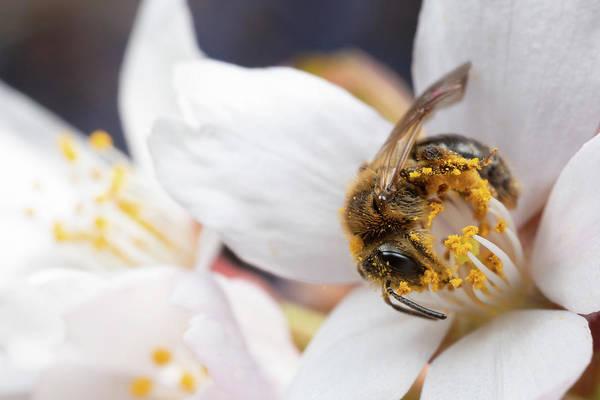 Photograph - Pollen Fiend by Brian Hale