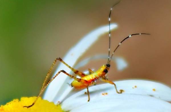 Photograph - Pollen Tracks by Candice Trimble