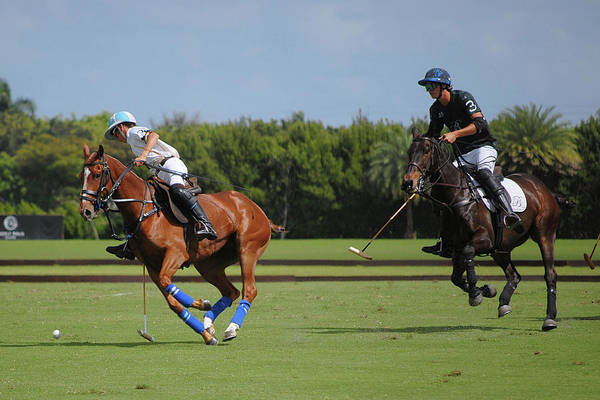 Photograph - Polo by Perry Correll