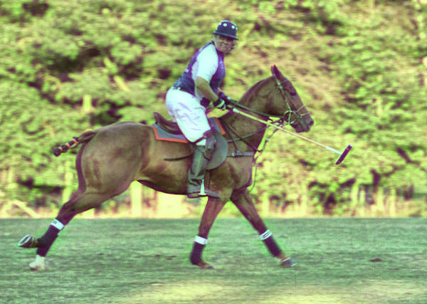 Photograph - Polo Pony Gallop by JAMART Photography
