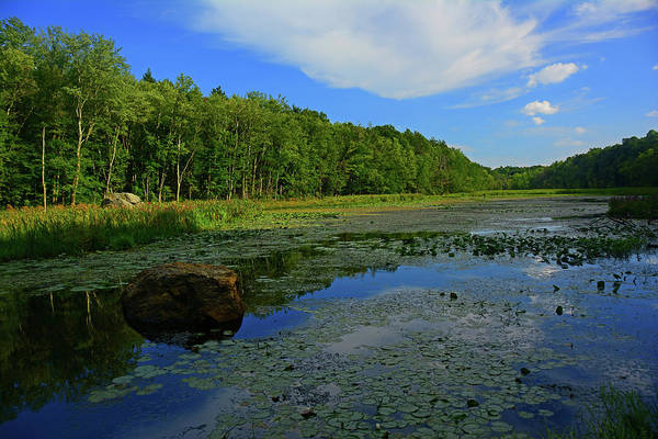 Photograph - Pond Along The At In Wawayanda State Park by Raymond Salani III