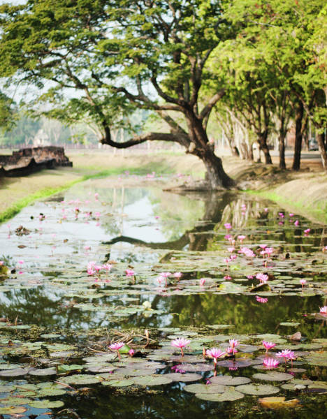 Wall Art - Photograph - Pond In Sukhothai by Michael Marquand