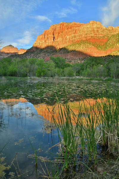 Photograph - Pond Reflection Of The Watchman In Zion Np by Ray Mathis