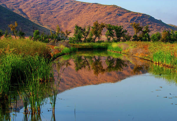 Photograph - Pond Reflections by Anthony Jones