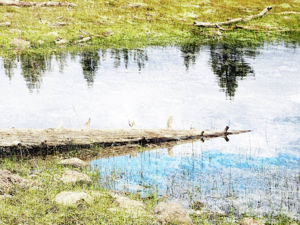 Wall Art - Photograph - Pond Reflections by Robert Ball