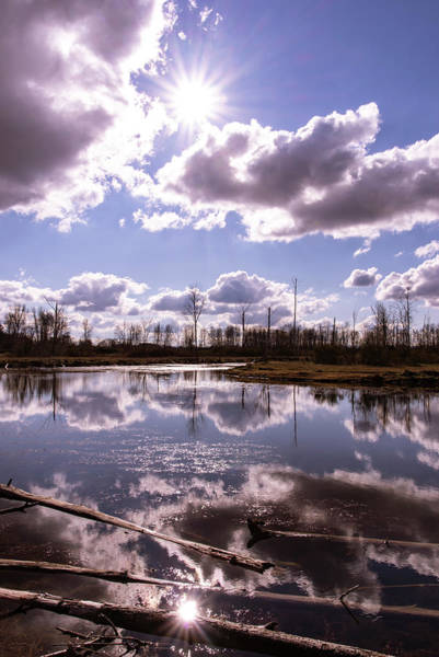 Photograph - Pond Reflections by Steven Clark
