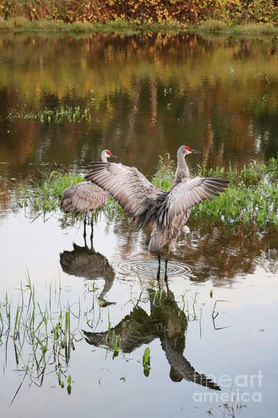 Wall Art - Photograph - Pond Visitors by Carol Groenen