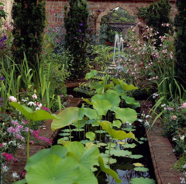 Photograph - Pond With Lotus Nelumbo Nucifera, East by Richard Felber