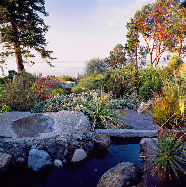 Yucca Palm Photograph - Pond With View To Lake by Richard Felber