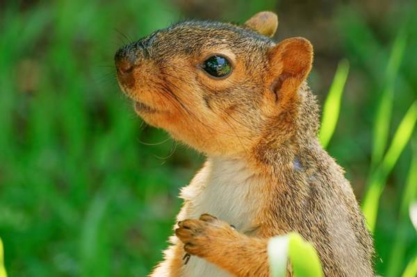Photograph - Pondering Squirrel by Don Northup