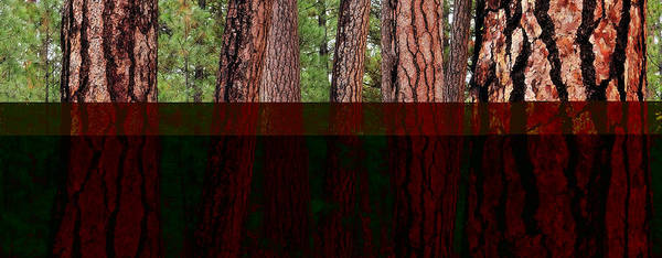 Wall Art - Photograph - Ponderosa Forest by Michael Bollino