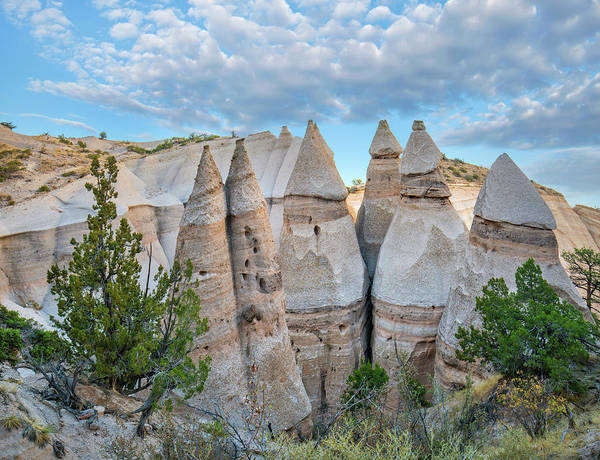 Wall Art - Photograph - Ponderosa Pine And Tent Rocks by Tim Fitzharris