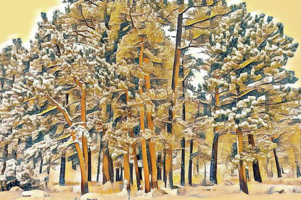 First Snowfall Wall Art - Photograph - Ponderosa Pines In Snow by Eric Glaser