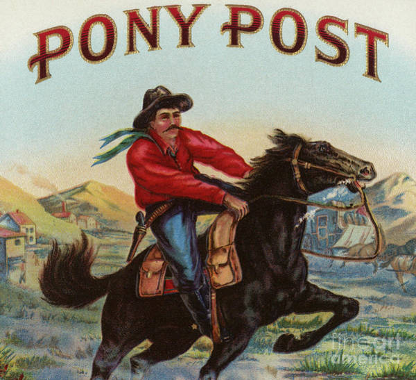 Wall Art - Painting - Pony Post Cigar Label by American School