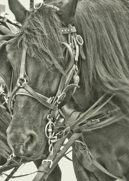 Photograph - Pony Rides by JAMART Photography