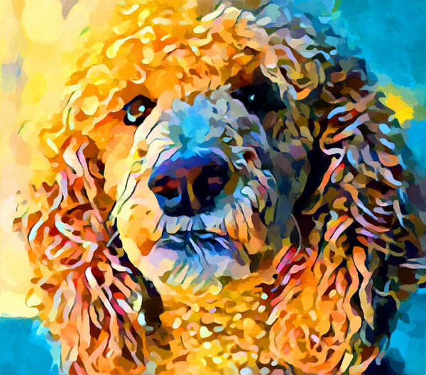 Wall Art - Painting - Poodle by Chris Butler
