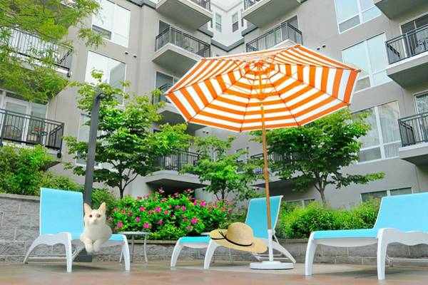 Wall Art - Photograph - Pool Side Tabby by Diana Angstadt