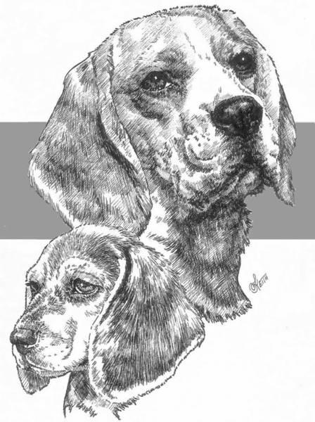 Drawing - Beagle And Pup by Barbara Keith
