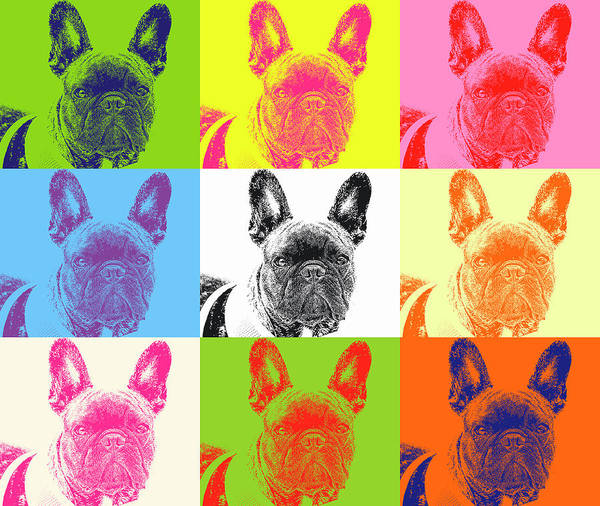 Wall Art - Photograph - Pop Pug by Geraldine Scull
