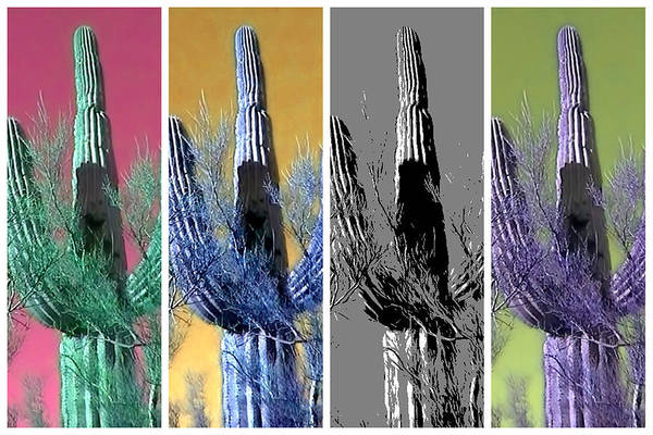Photograph - Pop Saguaro Cactus by Judy Kennedy
