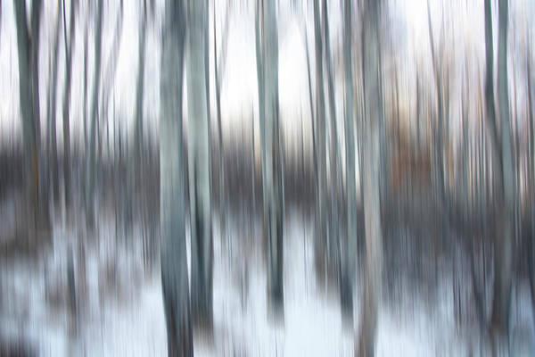 Photograph - Poplar Blur by Philip Rispin