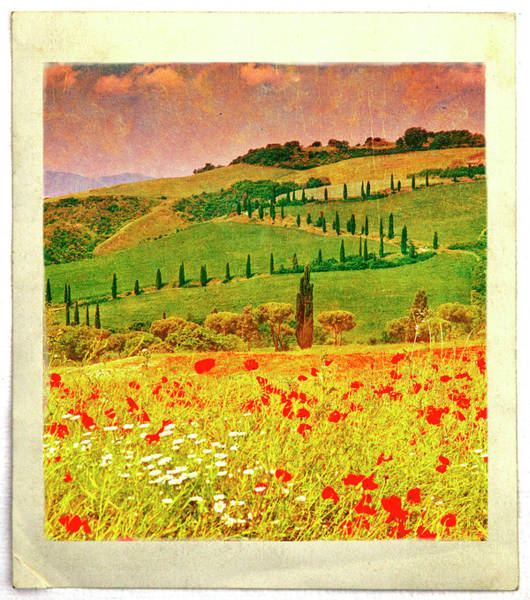 Cypress Digital Art - Poppies And Cyprus, Val Dorcia by Kathy Collins