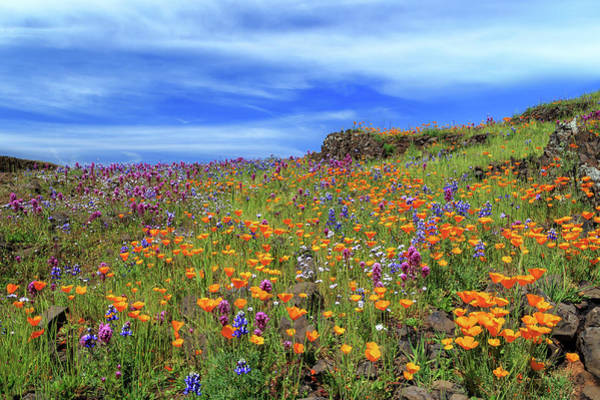 Photograph - Poppies And More On North Table Mountain by James Eddy