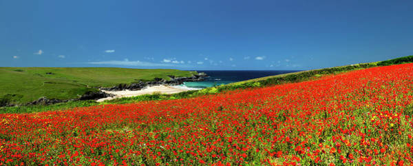Wall Art - Photograph - Poppies At West Pentire, Cornwall, Uk. by Maggie McCall