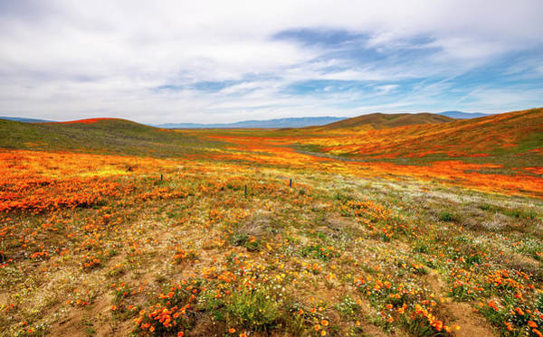 Photograph - Poppies As Far As The Eye Can See by Gene Parks