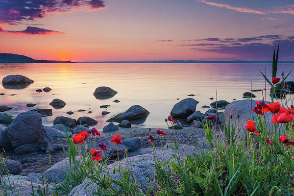 Photograph - Poppies By The Sea by Evgeni Dinev