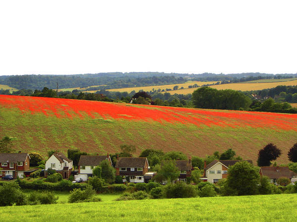 June Photograph - Poppies In Rural England by Ekaterina Nosenko