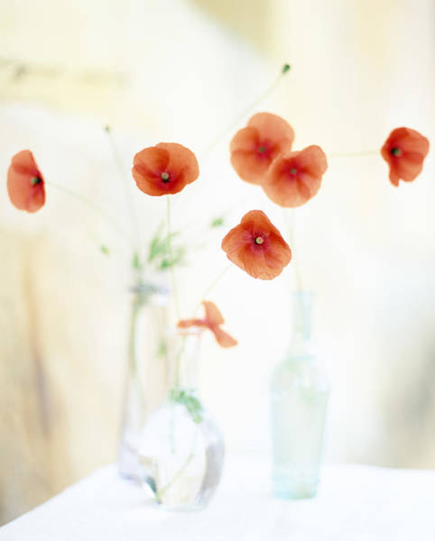 Photograph - Poppies In Vases by Victoria Pearson