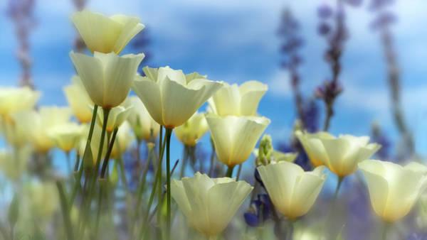 Wall Art - Photograph - Poppies In White  by Saija Lehtonen