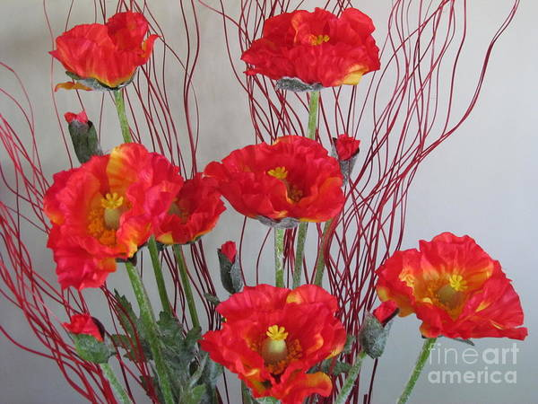 Photograph - Poppies  by Joyce Woodhouse