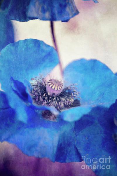 Wall Art - Photograph - Poppy Blues by Priska Wettstein