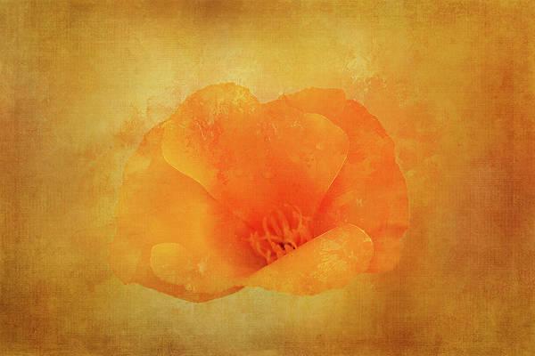 Wild Poppies Digital Art - Poppy Close Up by Terry Davis