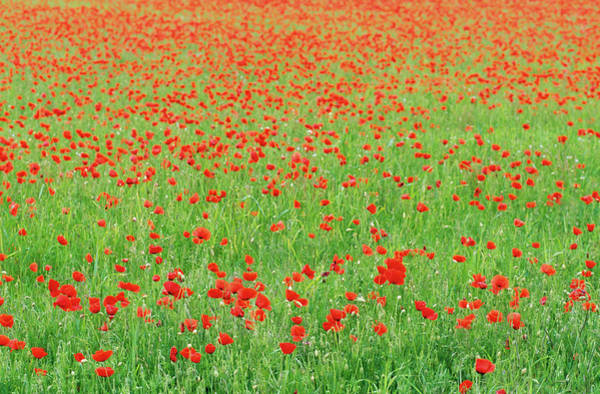 Wall Art - Photograph - Poppy Field, Loire Valley, France by Travel Ink