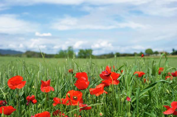 Remembrance Photograph - Poppy Field by Stockstudiox