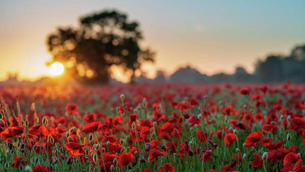Photograph - Poppy Field Sunrise 1 by James Billings