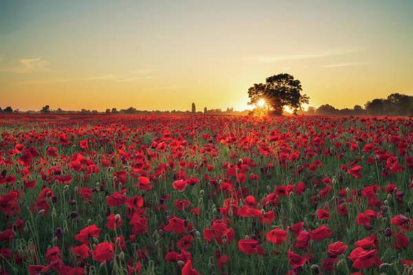 Photograph - Poppy Field Sunrise 3 by James Billings