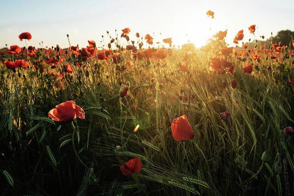 Photograph - Poppy Field Sunrise 6 by James Billings