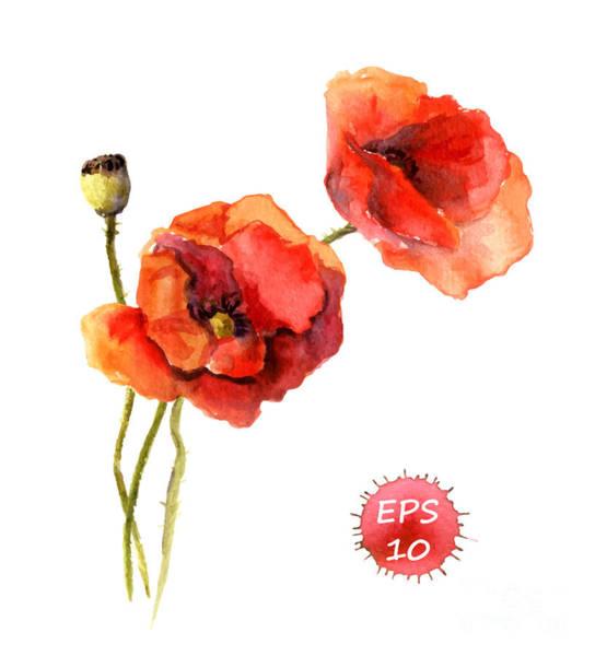 Floral Digital Art - Poppy Flower. Watercolor Vector by Le Panda