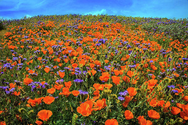 Photograph - Poppy Hill At The Reserve - Superbloom 2019 by Lynn Bauer