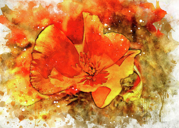Digital Art - Poppy by Mark Jackson