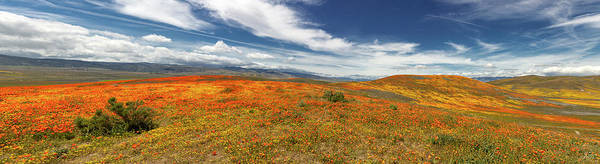 Photograph - Poppy Reserve Panorama 2 by Endre Balogh