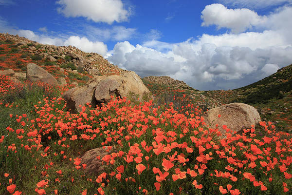 Wall Art - Photograph - Poppy Rock Garden by Bridget Calip